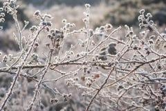 Frühlingssonnenschein auf bereifter Vegetation lizenzfreies stockbild