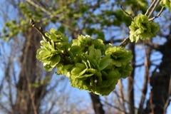 Frühlingssprössling an einem sonnigen Tag stockfotos