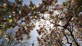 Frühlingsstadt modernes urbamn Gebäudebaumblüte lense Aufflackern stock video footage