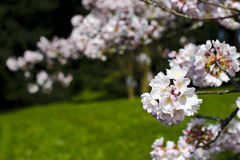 Frühlingsstimmungswiederbelebung lizenzfreie stockfotografie