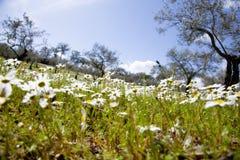 Frühlingsszene Stockbild
