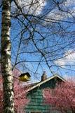 Frühlingsszene Lizenzfreie Stockfotos