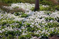 Frühlingstag Stockbild