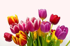 Frühlingstulpeblumenstrauß Lizenzfreies Stockbild