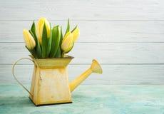 Frühlingstulpen in yelow Gießkanne Stockbild