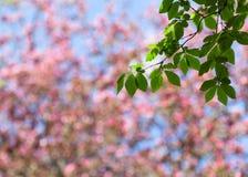 Frühlingsunschärfehintergrund mit grüner Niederlassung Stockbilder