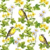 Frühlingsvögel, Wiese blüht, wildes Kraut Nahtloses Muster Wasser-Farbe Lizenzfreie Stockfotos