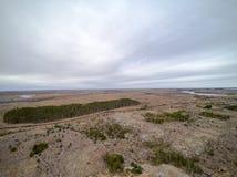 Frühlingsvegetation und Koniferenwaldvogelperspektive, Brummenansicht Lizenzfreies Stockbild