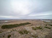 Frühlingsvegetation und Koniferenwaldvogelperspektive, Brummenansicht Stockfotos