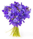 Frühlingsveilchenblumen schließen oben Lizenzfreies Stockbild