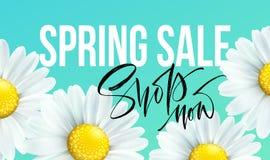 Frühlingsverkaufsfahne, Hintergrund mit Gänseblümchen blüht Saisonrabatt Auch im corel abgehobenen Betrag Stockfotografie