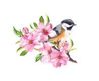 Frühlingsvogel auf blühender Niederlassung mit rosa Blumen der Kirsche, Kirschblüte, Apfel, Mandelblumen Wasser-Farbe vektor abbildung