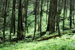 Frühlingswald Lizenzfreies Stockbild