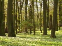 Frühlingswald stockfotos