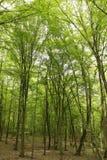 Frühlingswald lizenzfreies stockfoto