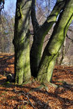 Frühlingswald Stockfotografie