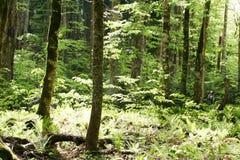 Frühlingswald lizenzfreie stockfotografie