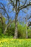 Frühlingswald Stockbilder