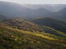 Frühlingswald auf sonnigen Hügeln stockfotos