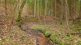 Frühlingswald mit Bach und Blumen stock footage