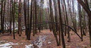 Frühlingswald in Nowosibirsk Akademgorodok Lizenzfreies Stockfoto