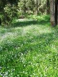 Frühlingswald und Feld von Blumen Stockbilder