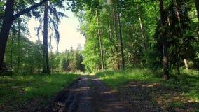 Frühlingswald und grüne Bäume am sonnigen Tag, Polen stock video footage