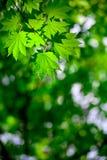 Frühlingswaldhintergrund Lizenzfreies Stockbild