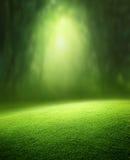 Frühlingswaldhintergrund Lizenzfreies Stockfoto