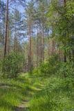 Frühlingswaldwaldweg Sonniger voller Tag stockfotos