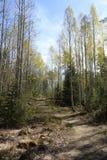 Frühlingswaldweg Stockfotografie