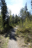 Frühlingswaldweg Lizenzfreie Stockfotografie
