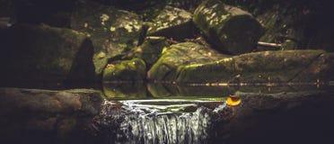 Frühlingswasserfall mit flüssigem Wasser im natürlichen Pfund unter moosigen Steinen Stockfotos