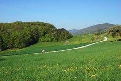 Frühlingsweg Stockbilder