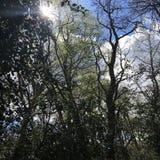 Frühlingsweg im Wald Stockfotos