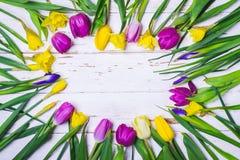 Frühlingsweißer Blumenhintergrund Runder Rahmen mit bunten Tulpen, Narzissen und Iris senkt Lizenzfreie Stockfotos