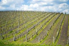 Frühlingsweinberg lizenzfreies stockfoto