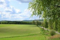 Frühlingswiese Lizenzfreies Stockfoto