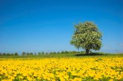 Frühlingswiese Lizenzfreie Stockbilder