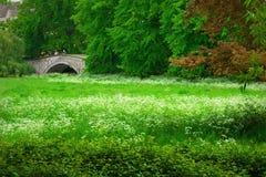 Frühlingswiese in Cambridge Lizenzfreies Stockfoto
