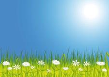 Frühlingswiese mit Blumen Stock Abbildung