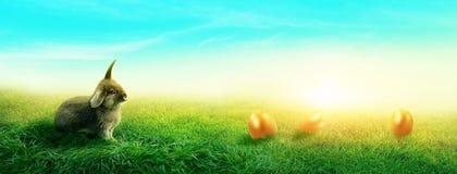 Frühlingswiese mit einem Kaninchen lizenzfreie stockfotos