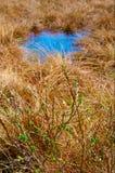 Frühlingswiese mit grünem Busch und blauer Pfütze. Stockbild