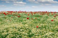 Frühlingswiese mit Landschaft der wilden Blumen Stockfotos