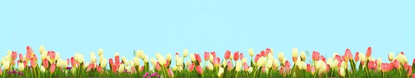 Frühlingswiese mit sonnigen Blumen Wiedergabe 3d Stockbild