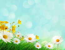 Frühlingswiese mit wilden Blumen Lizenzfreie Stockfotografie