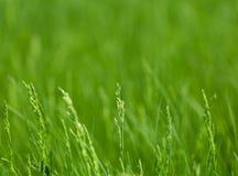 Frühlingswiesenhintergrund Lizenzfreies Stockfoto