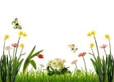 Frühlingswiesenlandschaft Stockbild