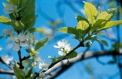 Frühlingszeit Stockbilder