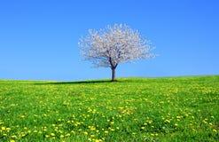 Frühlingszeit Lizenzfreies Stockbild